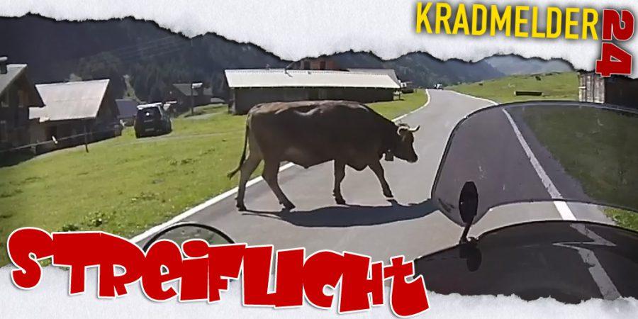 Und plötzlich steht 'ne Kuh vor Dir!